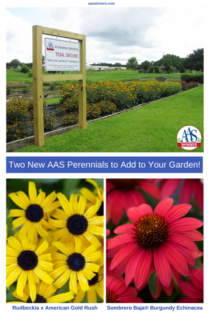 Two New AAS Perennial Winners to Add to Your Garden! - All-America Selections