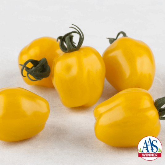 Tomato Apple Yellow - 2020 AAS Edible - Vegetable Winner