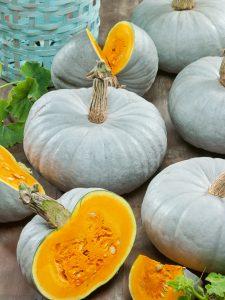 Pumpkin Crown Prince - 2020 AAS Edible - Vegetable Winner