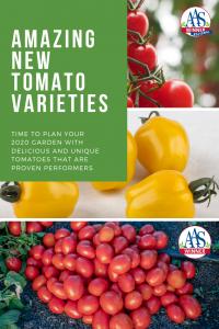 Tomatoes AAS Winners
