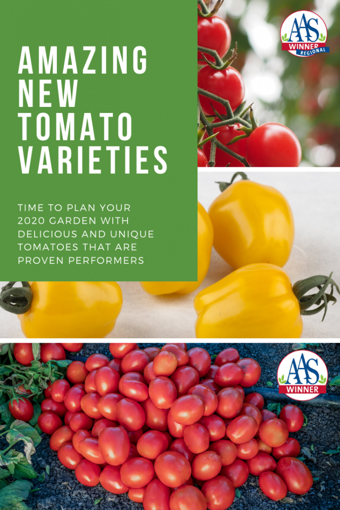 Tomatoes AAS Winners