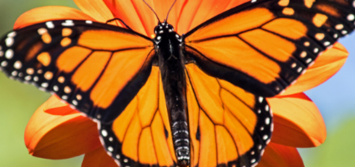 Create Your Own AAS Pollinator-Friendly Garden