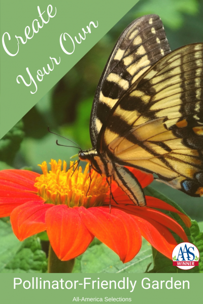 Create Your Own Pollinator-Friendly Garden with AAS Winners - All-America Selections