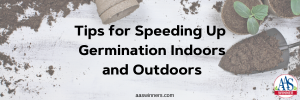 Tips for Speeding Up Germination Indoors and Outdoors - AAS Winners