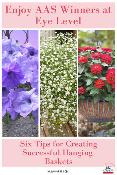 Hanging Basket AAS Blog Pinterest 2.25.20