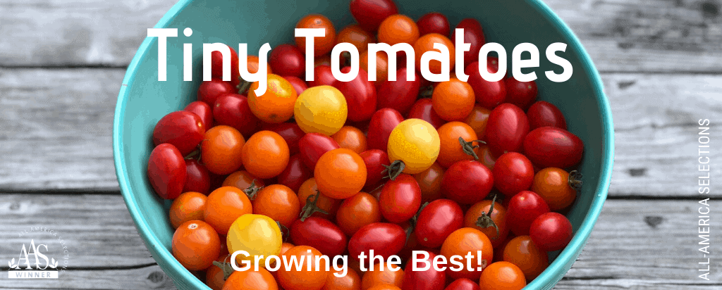 Tiny Tomatoes - The best cherry and small-fruited tomatoes to grow in garden beds and containers - All-America Selections Winners