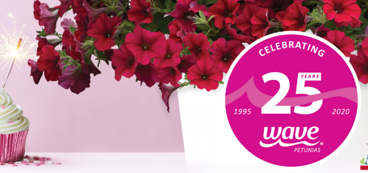 Celebrate Wave Petunias 25th Birthday with All-America Selection Wave Petunias