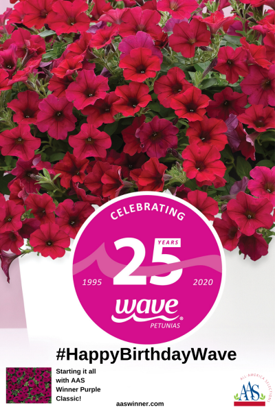 #HappyBirthdayWave - Since the debut of Wave® Purple Classic in 1995 (an AAS Winner), Wave Fans have been choosing the world's best-known spreading petunia. There are now 6 AAS Winning Wave Petunias