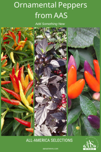 Grow Your Own Ornamental Peppers from AAS - Add something new to your garden with these beautiful and interesting Ornamental Peppers