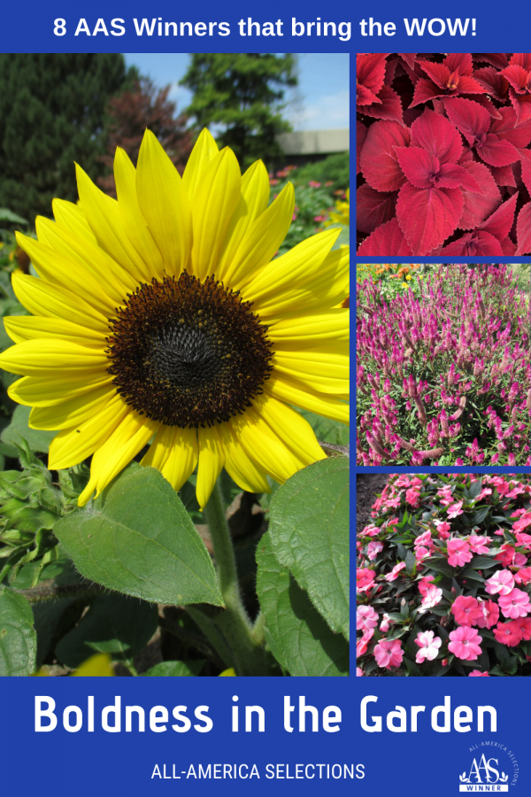 Boldness in Your Garden - 8 AAS Winners that bring the WOW to your garden - All-America Selections