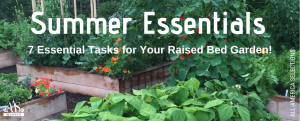 Summer Essential - 7 essential tasks for your raised bed garden - All-America Selections