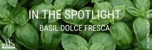 In The Spotlight - Basil Dolce Fresca - AAS Winners