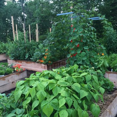 Seven essential summer tasks for a raised bed vegetable garden - All-America Selections