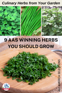 9 AAS Winning Herbs You Should Grow in Your Garden - All-America Selections