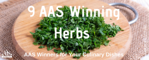 9 AAS Winning Herbs to grow in your garden - All-America Selections