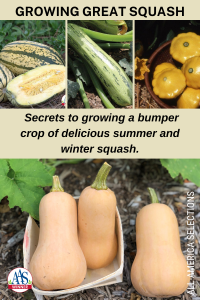 Growing Great Squash - Secrets to growing a bumper crop of delicious summer and winter squash with AAS Winners