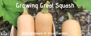Growing Great Squash with AAS Winners in Your Garden - Tips and tricks for the best - All-America Selections