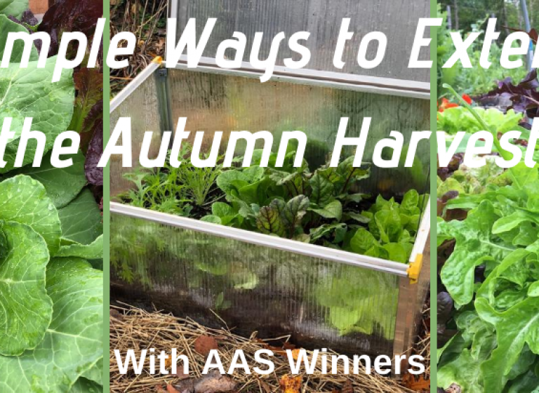 Simple Ways to Extend the Autumn Harvest with AAS Winners