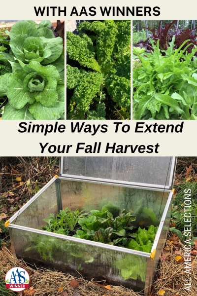 Learn Simple Ways to Extend Your Fall Harvest with AAS Winners #fallgardening