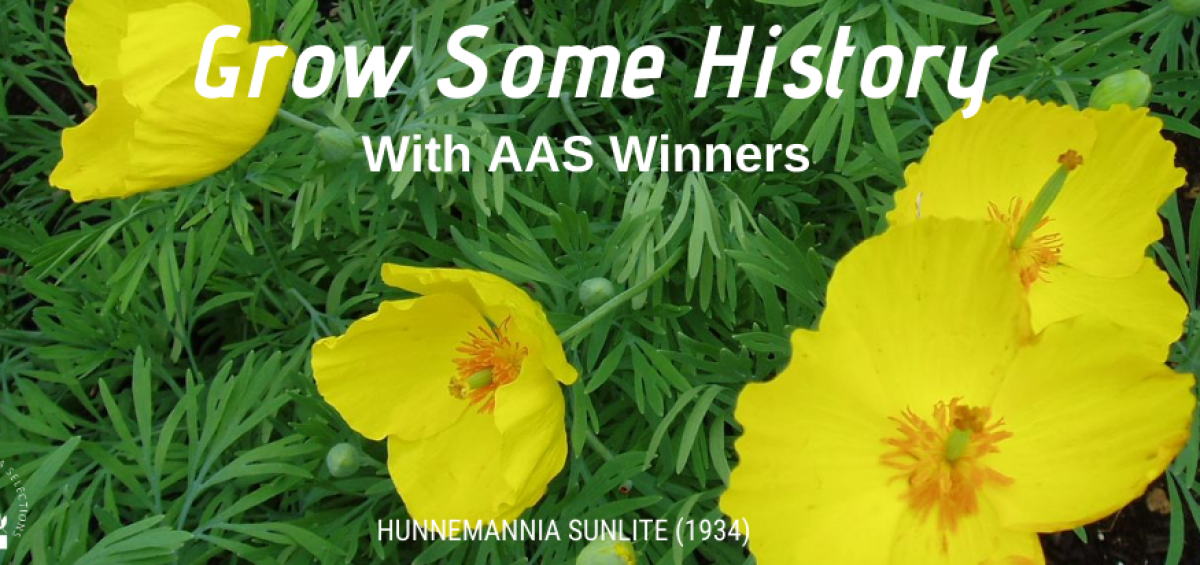 Grow Some History with AAS Winners - All-America Selections