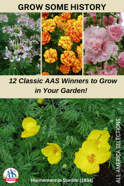 Grow Some History, 12 Classic AAS Winners to Grow in Your Garden! All-America Selections