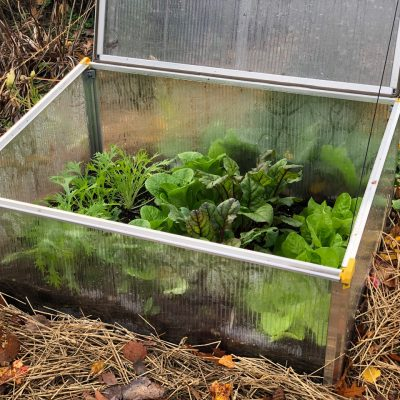 Keep your garden longer in the Fall with a Cold Frame - Succession Fall Planting with AAS Winners