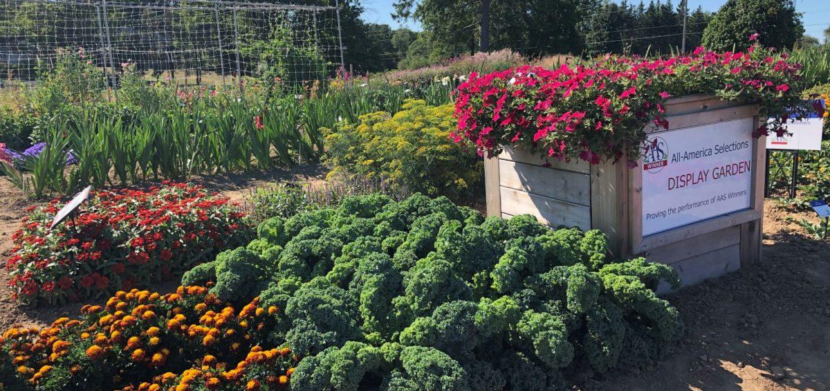Third Place Winner (tie): William Dam Seeds, Dundas, Ontario
