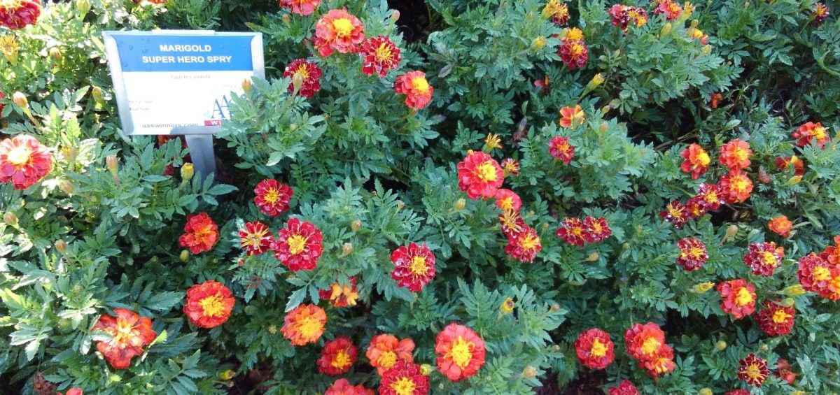 Third Place Winner: Clark Botanic Garden, Albertson, New York