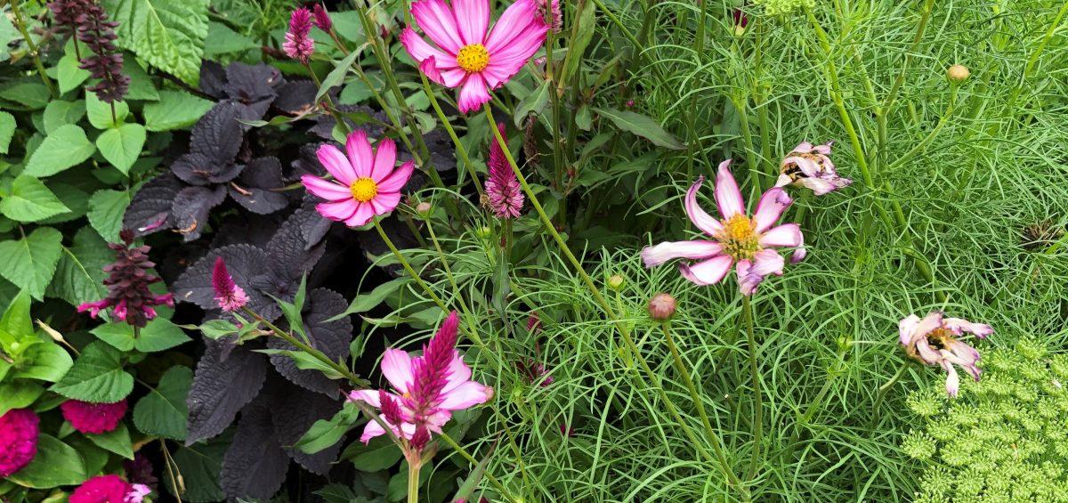 Third Place Winner: Denver Botanic Gardens, Denver, Colorado