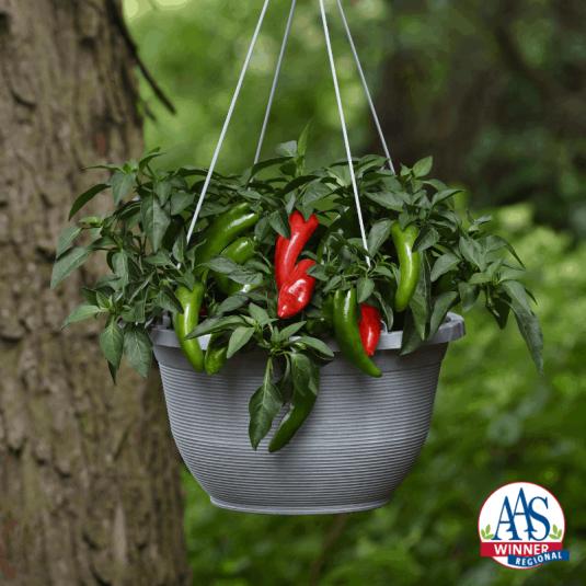 Pepper Pot-a-peno - AAS Edible - Vegetable Winner