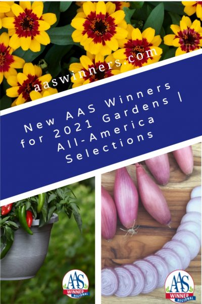 New AAS Winners for your 2021 Garden - All-America Selections