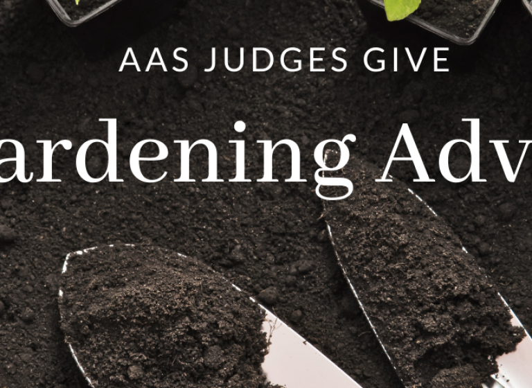 Garden Advice from our AAS Trial Judges