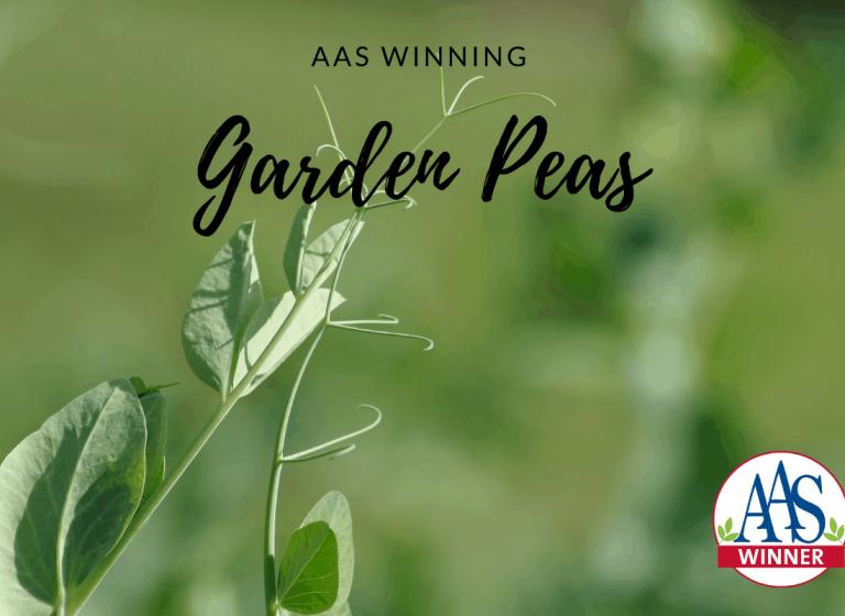 AAS Winning Garden Peas