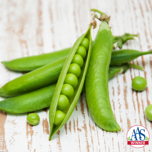 English peas: look for nicely rounded, bright green pods that feel velvety and show the peas (called berries) inside beginning to swell. - All-America Selections