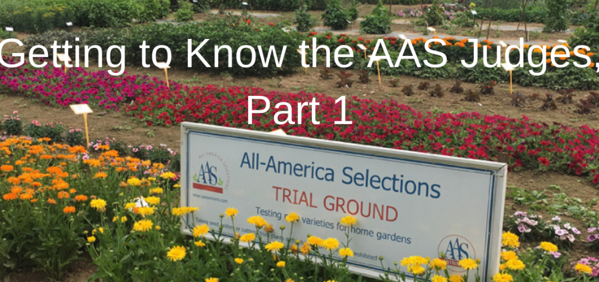 Getting to know your AAS Judges