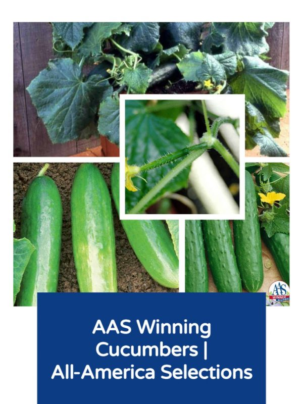 AAS Winning Cucumbers for your garden - All-America Selections
