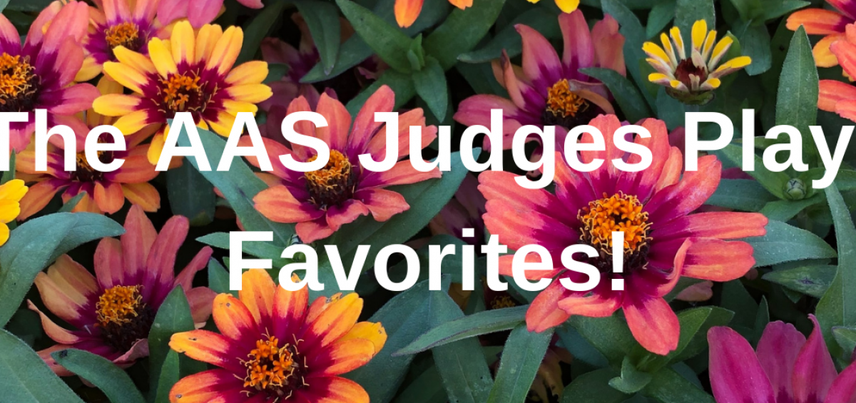 The AAS Judges Favorite Winners - All-America Selections