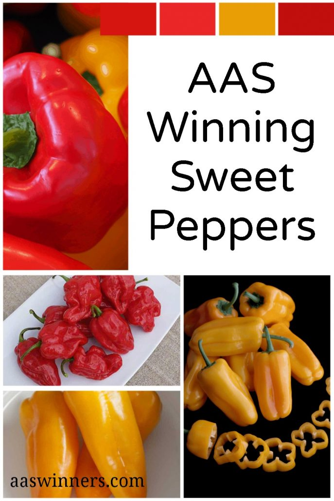 AAS Winning Peppers for your garden! So many different sweet peppers to enjoy - All-America Selections