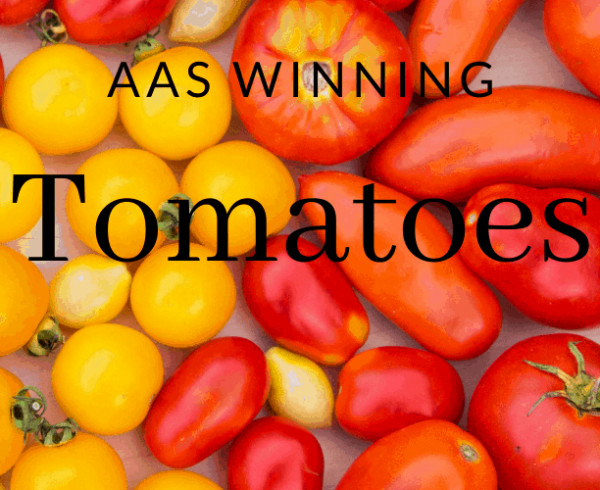 AAS Winning Tomatoes and their types