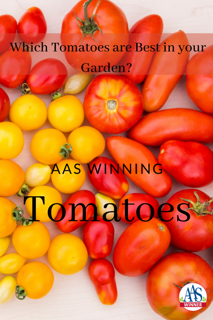 AAS Winning Tomato Types -Tomatoes are classified in a number of different ways, including fruit shape, days to maturation, color and growth habit. Which will work best in your garden? - All-America Selections