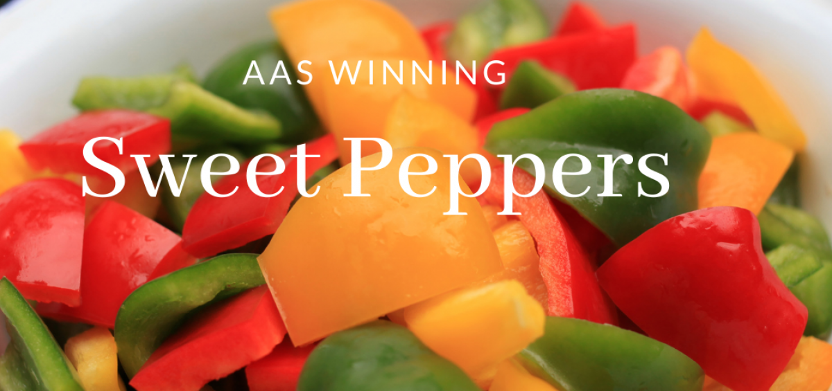 AAS Winning Sweet Peppers - Grow Your Own - All-America Selections