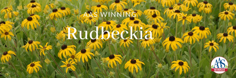 AAS Winning Rudbeckia - All-America Selections