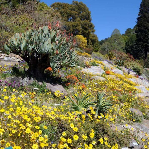 Photo of university of california berkeley botanical garden
