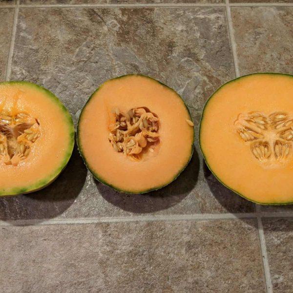 Melon trial