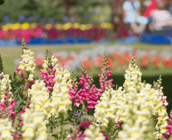 AAS Judges reveal their favorite public gardens - are they yours? - All-America Selections