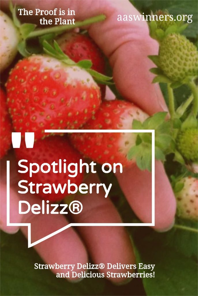 Strawberry Delizz® Delivers Easy and Delicious Strawberries! - All-America Selections