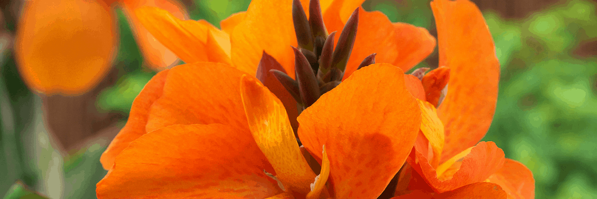 Orange AAS Winners bring a bright color to any garden - All-America Selections